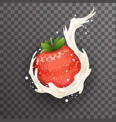 realistic cream milk strawberry curl splash drops vector image