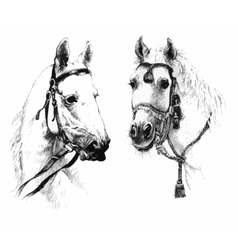 Set of black and white ink hand drawn horses heads vector image vector image
