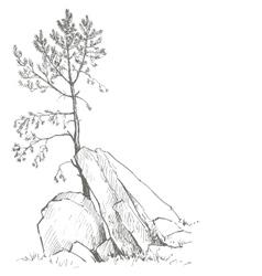 Pine tree and rocks vector