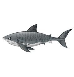 Gray shark looking angry vector image