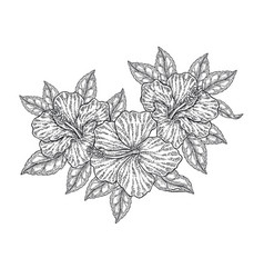 hibiscus flowers and leaves isolated on white vector image