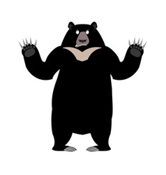 himalayan bear surprise emotion wonderl wild vector image