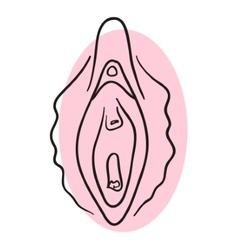 Vagina vector image