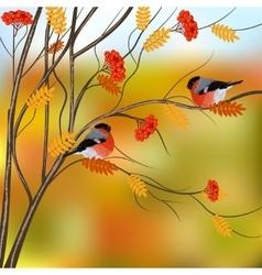 Autumn card with bullfinches sitting on rowan tree vector