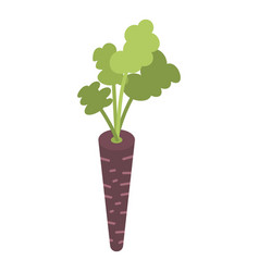 black carrot icon isometric style vector image