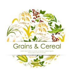 cereals grain and seeds banner vector image