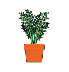 white background with carrot plant in flower pot vector image
