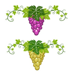 grapes border with leaves vector image vector image