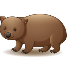 Cartoon of wombat isolated vector