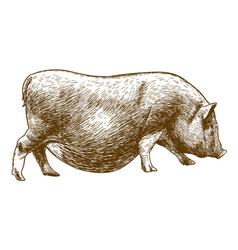 engraving antique hog vector image