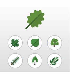 flat icon bio set of decoration tree spruce vector image