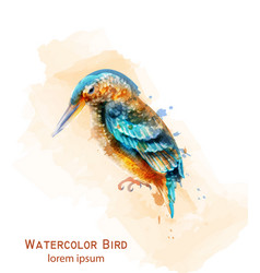 kingfisher bird watercolor colorful tropic vector image
