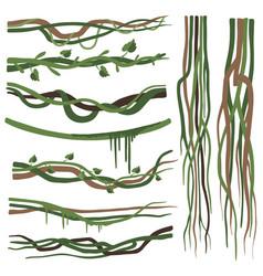 Tropical liana branches stems vines set jungle vector