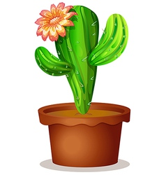 A cactus plant with a flower vector image