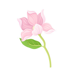 Gently pink magnolia bloomed flower item vector