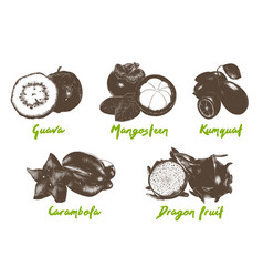 Engraved style organic exotic fruits collection vector