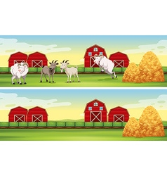 Farm scene with goats and barns vector