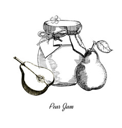 pear jamhand drawn ink sketch of vector image