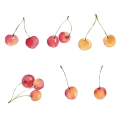 Watercolor cherries isolated on white background vector image vector image