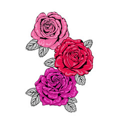 Trio tattoo style roses in pink red and purple vector