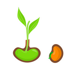 plant growing from seed start of new life concept vector image vector image