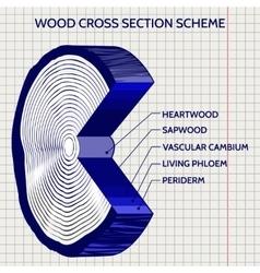 Sketch of wood cross section scheme vector