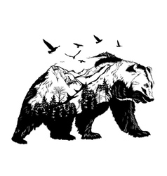 hand drawn bear for your design wildlife concept vector image