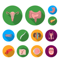 Internal organs of a human flat icons in set vector