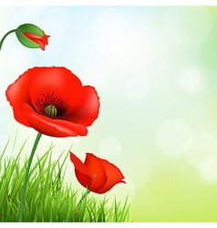Red Poppy And Green Grass vector