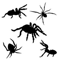 SpiderSet vector image