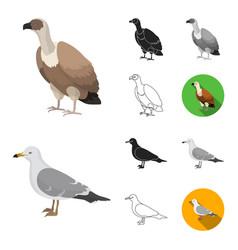 types of birds cartoonblackflatmonochrome vector image