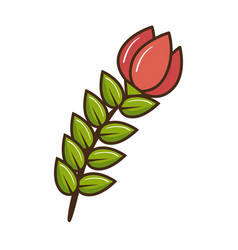 beautiful rose isolated icon vector image