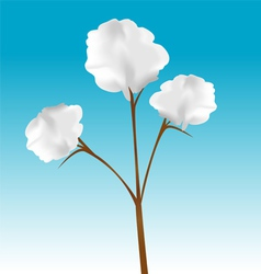 Cotton plant vector