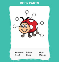 Lady bug vocabulary part of body vector