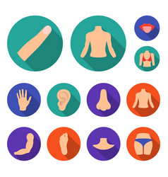Part body limb flat icons in set vector