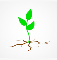 young tree growing on arid land vector image