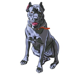 black Cane Corso smiling Italian breed of dog vector image vector image