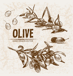Digital detailed line art olive vector