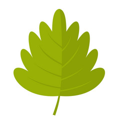Green hawthorn leaf icon isolated vector