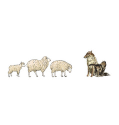 two sheeps and lamb are walking towards wolf vector image