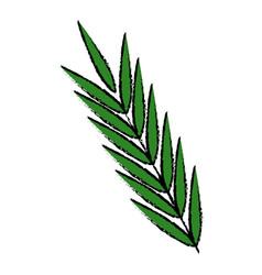 leave foliage nature botanical decoration vector image vector image