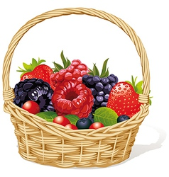 basket with berries vector image