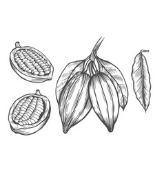 cocoa drawing set vector image