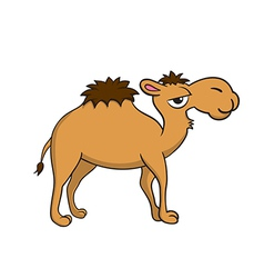 isolated a camel vector image