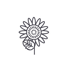 sunflower line icon concept sunflower flat vector image