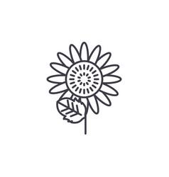 sunflower line icon concept sunflower flat vector image