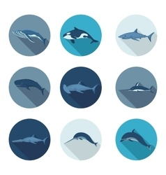 whales and fish flat icons vector image vector image