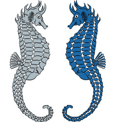 two seahorse vector image vector image