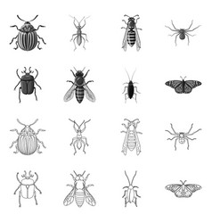 isolated object of insect and fly icon collection vector image