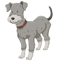 Little dog with gray fur vector image